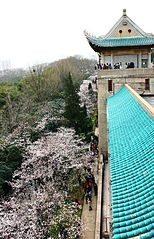 154px-Cherry_Blossom_in_Wuhan_University